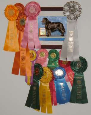 Boone's 2009-2010 ribbons