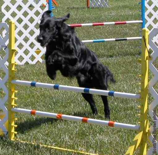 Cosmo, Specialty agility trial