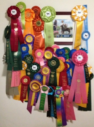 Boone's 2009-2014 ribbons