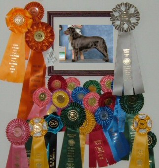 Boone's 2009-2011 ribbons